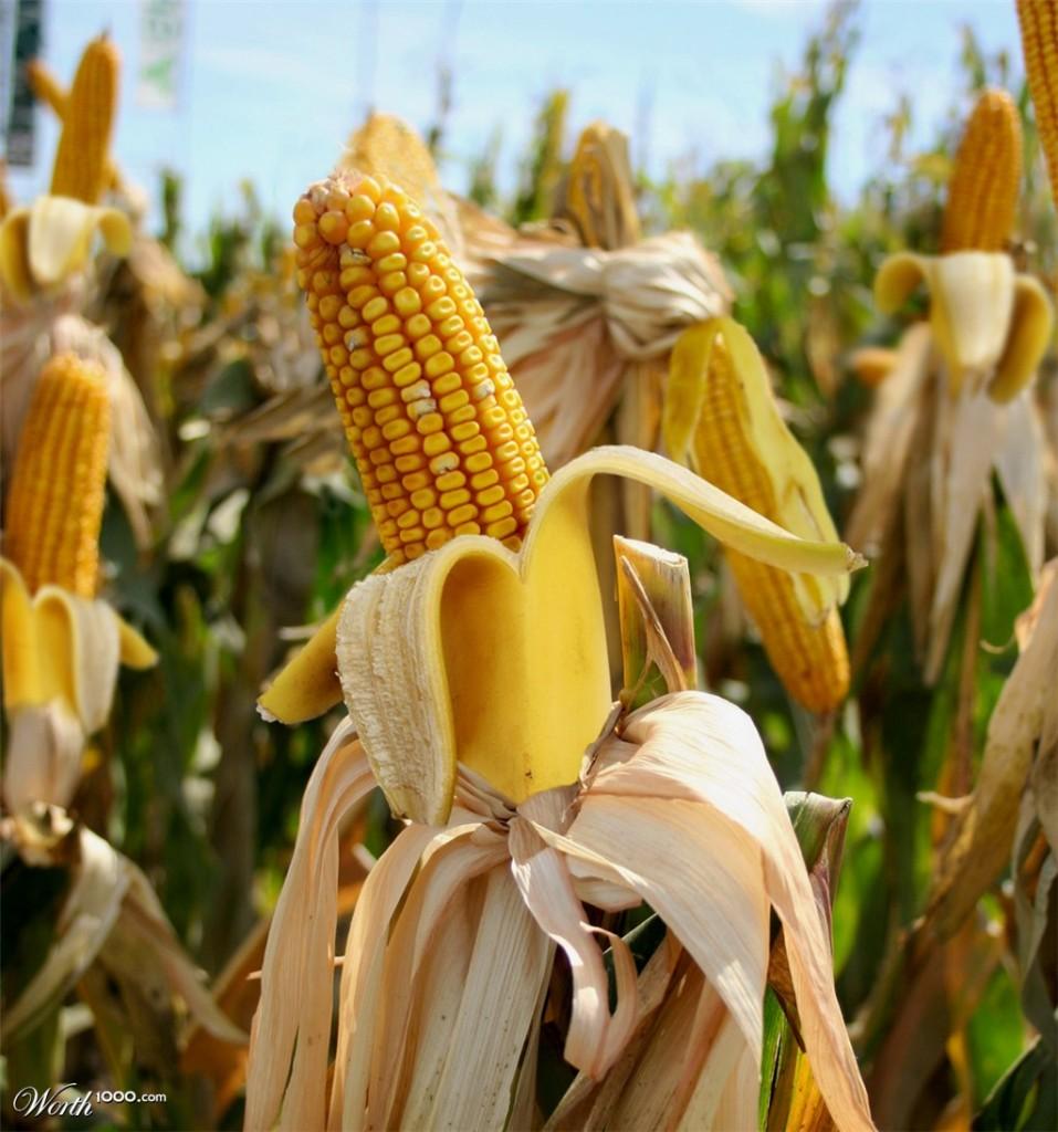 Photoshop gyümölcs: kukorica-banán