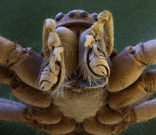 Elektronmikroszkópos fotó - Pókfej