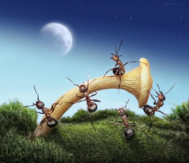 Andrey Pavlov - a hangyák világa (4)