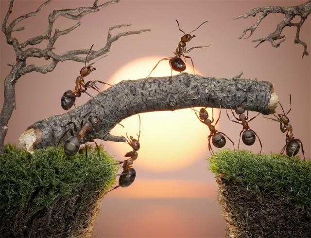 Andrey Pavlov - a hangyák világa (5)