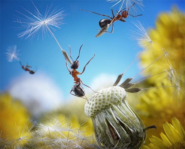 Andrey Pavlov - a hangyák világa (9)