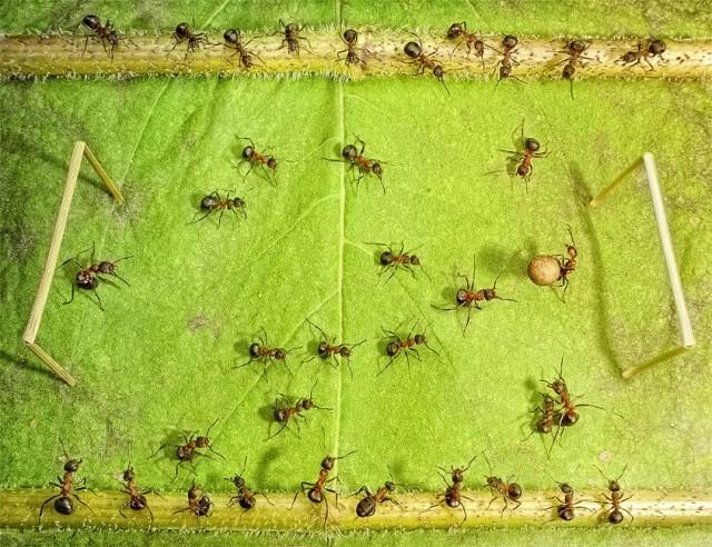 Andrey Pavlov - a hangyák világa (10)