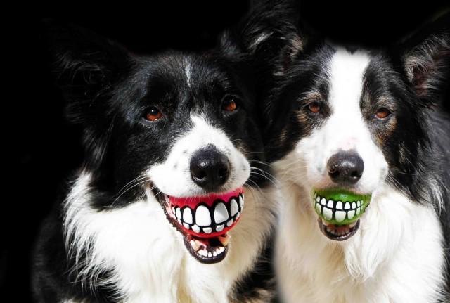 A mosolygós kutya labda 1